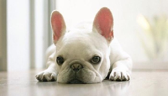 Cani: migliorano la vita e fanno bene al cuore, ecco perché