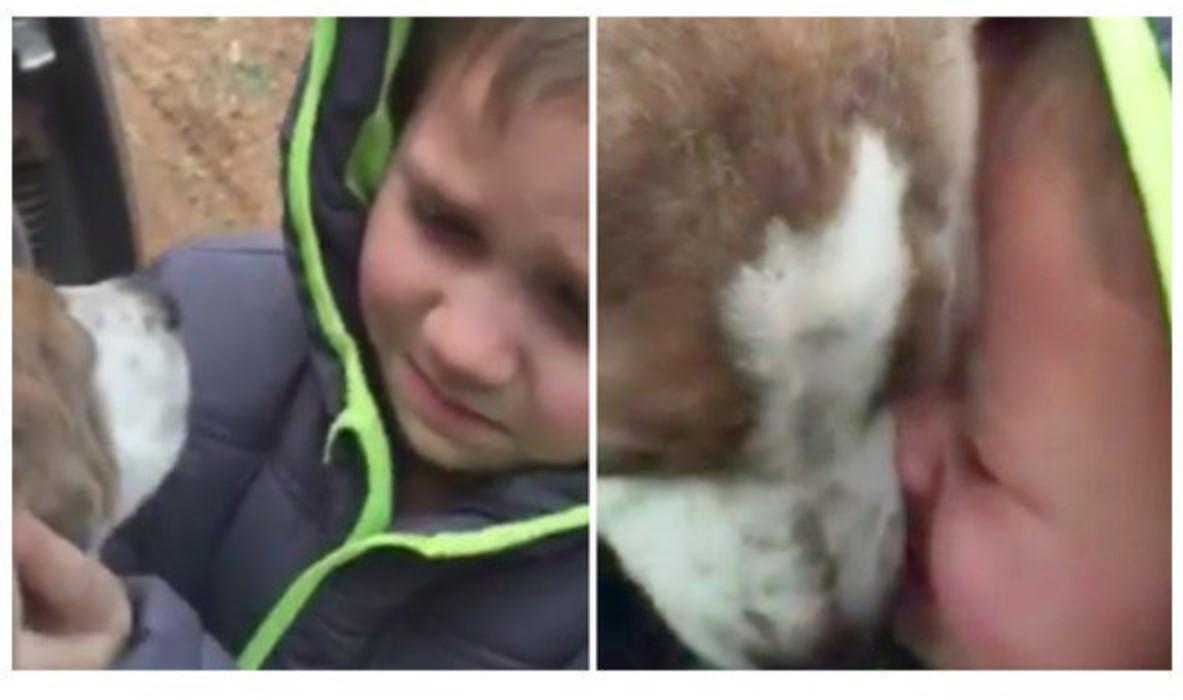 Cucciolo ritrovato: video del bimbo di 6 anni diventa virale