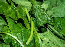 dieta degli spinaci