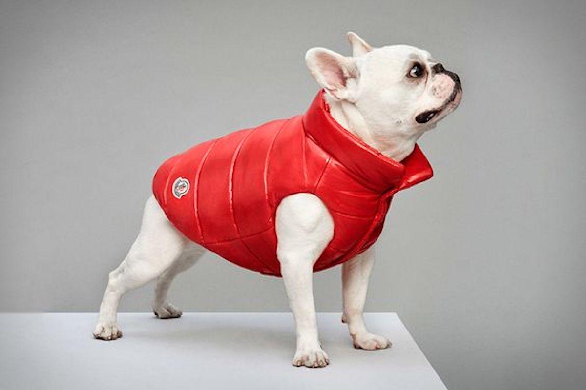 moncler poldo dog