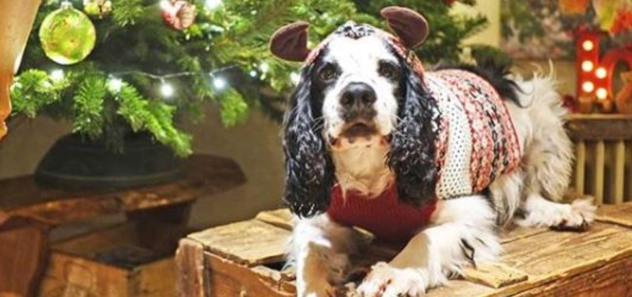 maglioni natalizi cane