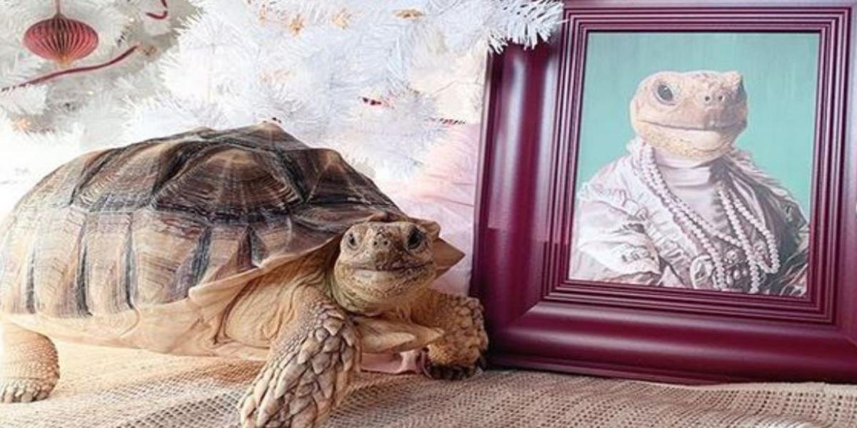 tartaruga glamour