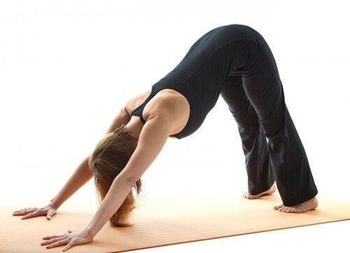 cane a faccia in giu yoga