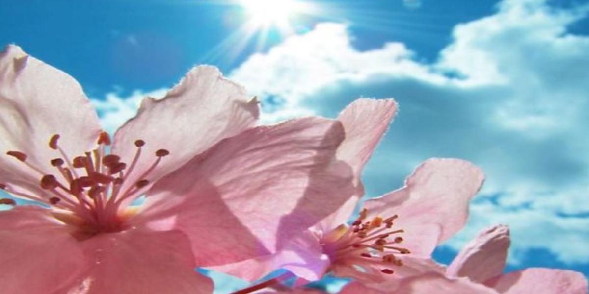 come proteggere i tuoi fiori dal caldo