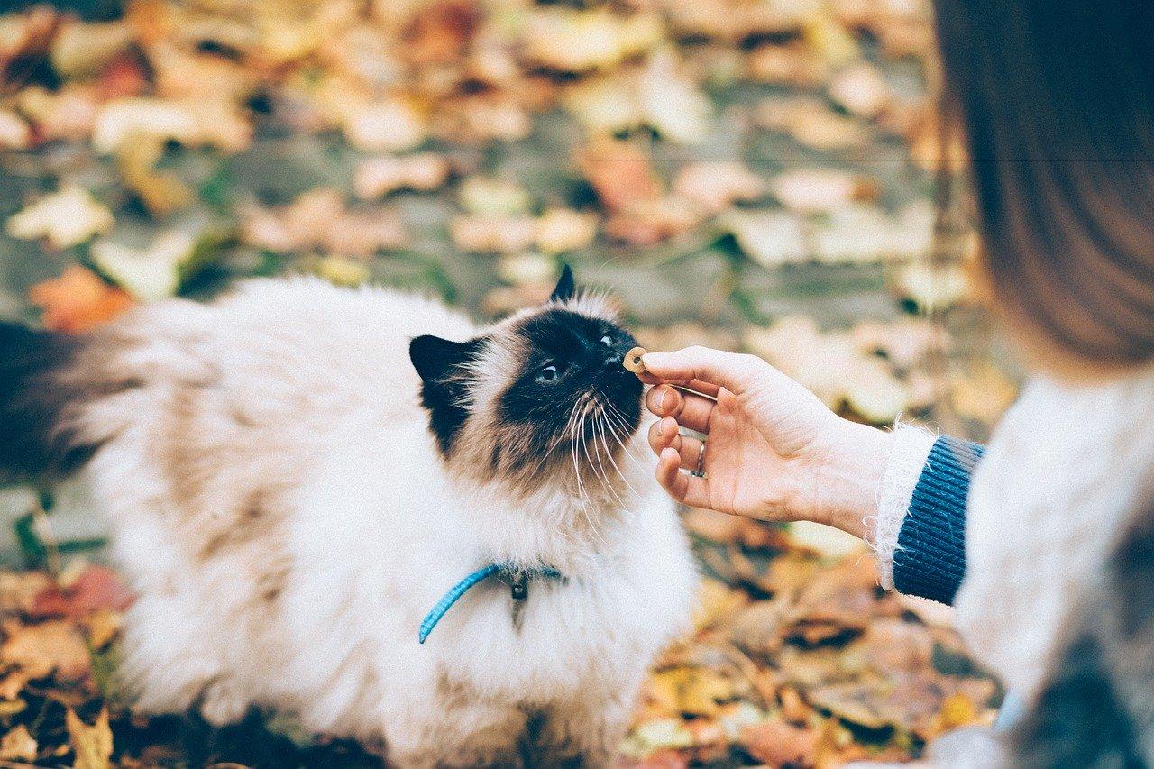 Alimenti che i gatti non possono assolutamente mangiare