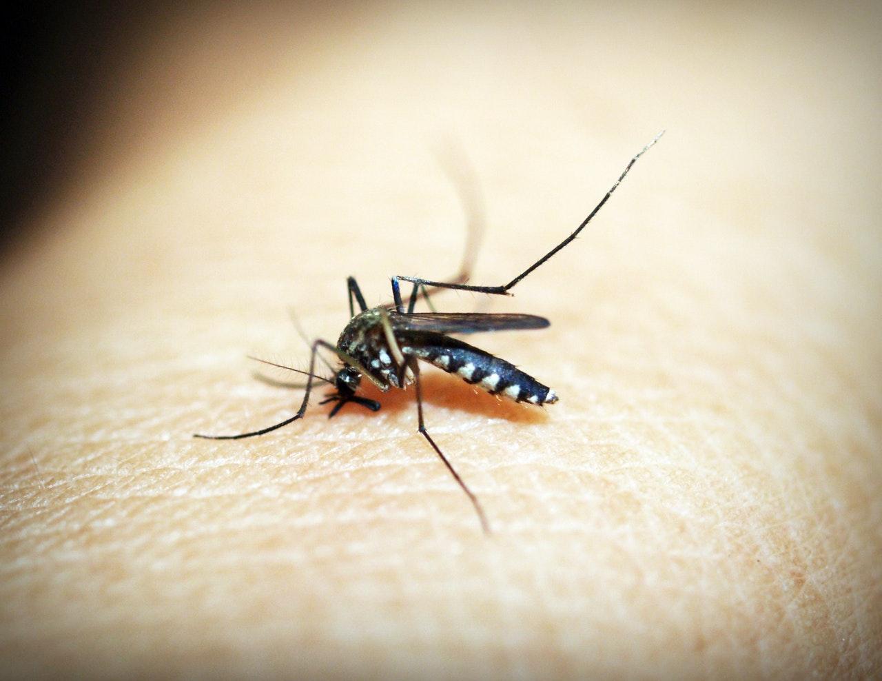 curiosità sulle zanzare