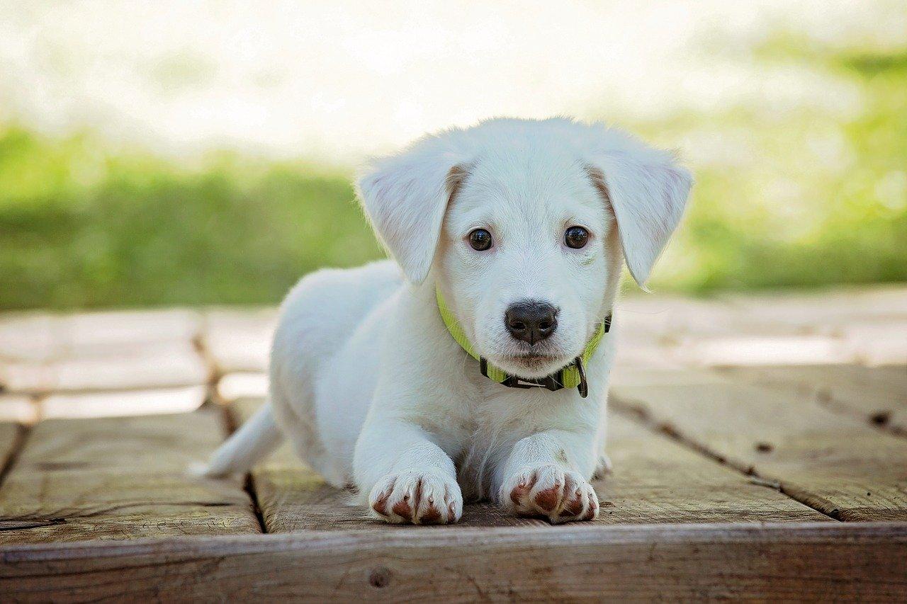 Cani, significato comportamenti