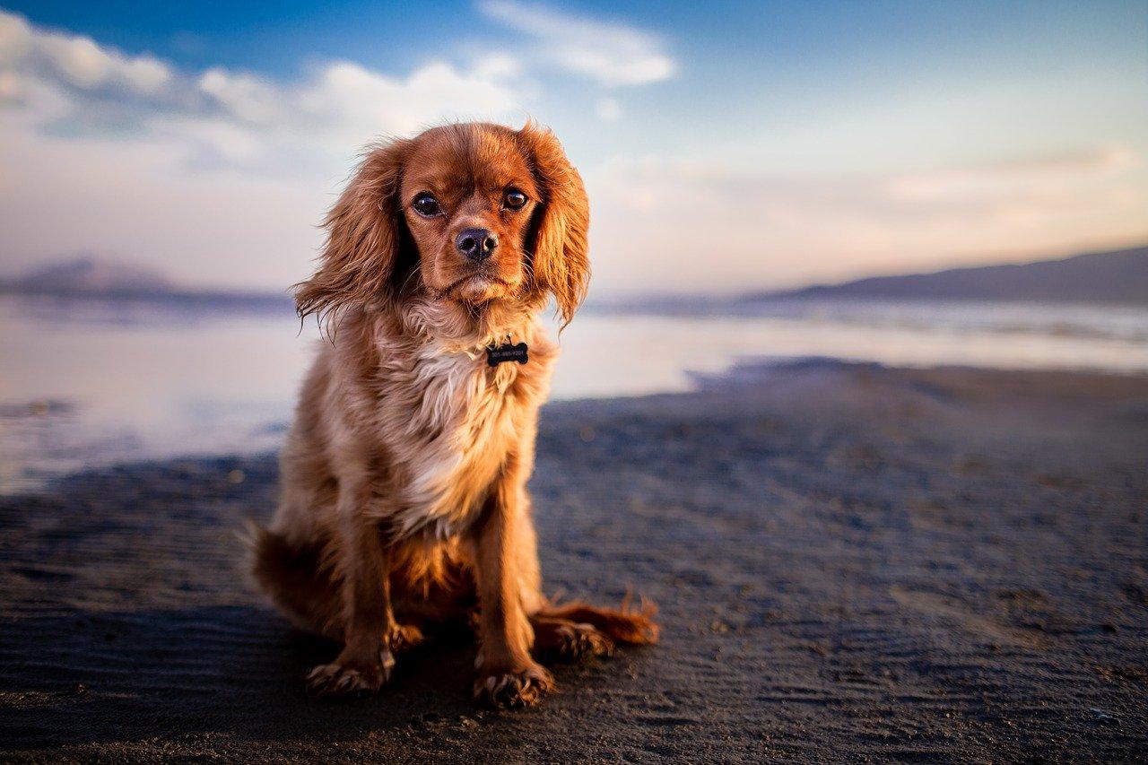Comportamenti cani significato