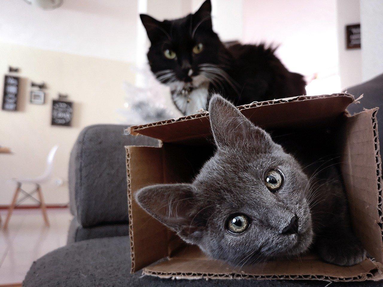 Comportamenti gatti significato