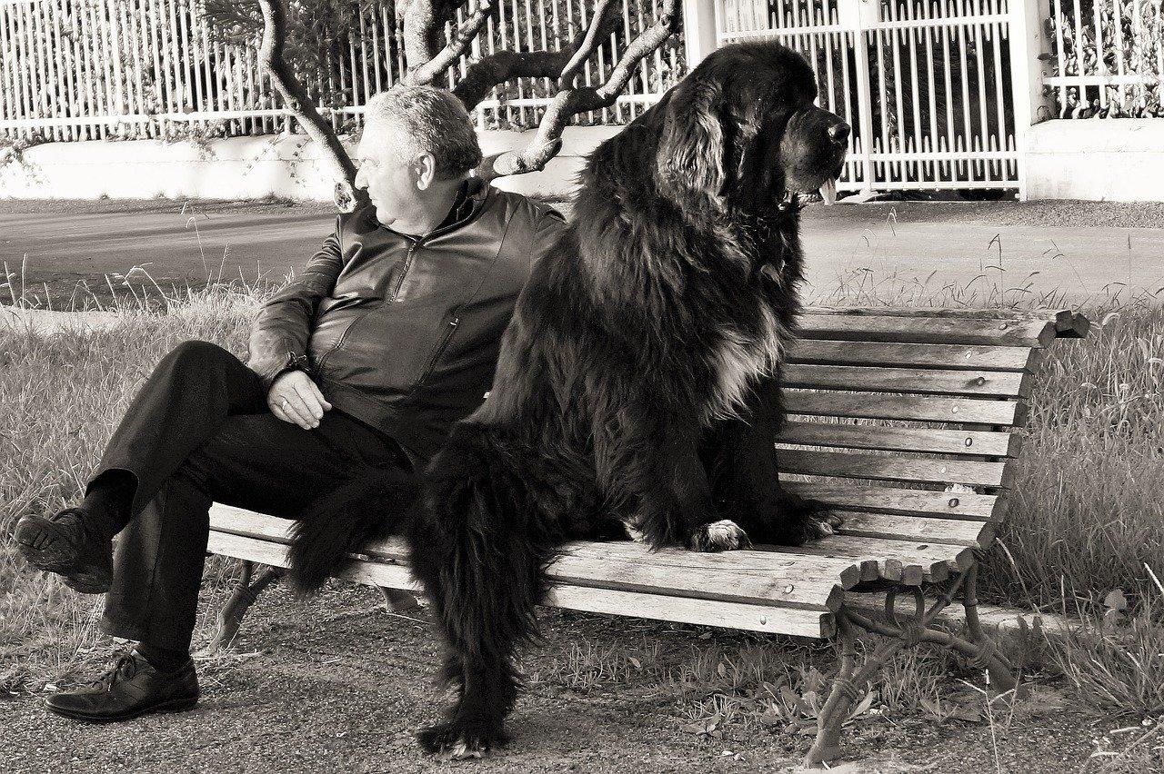 Dieci comandamenti del cane