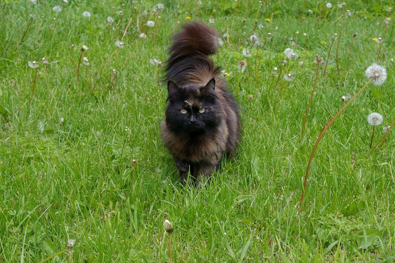 Gatti movimenti coda