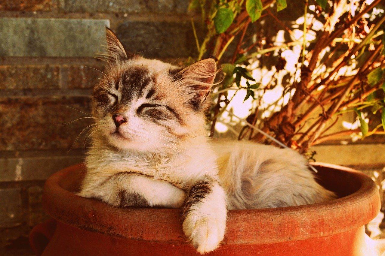 Gatti significato comportamenti