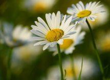 Antistaminico naturale per allergie