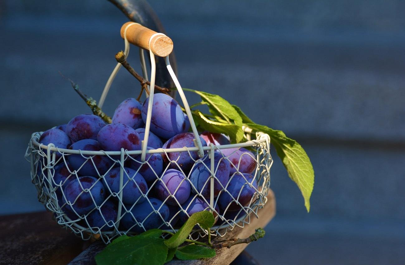 ampeloterapia cura dell'uva