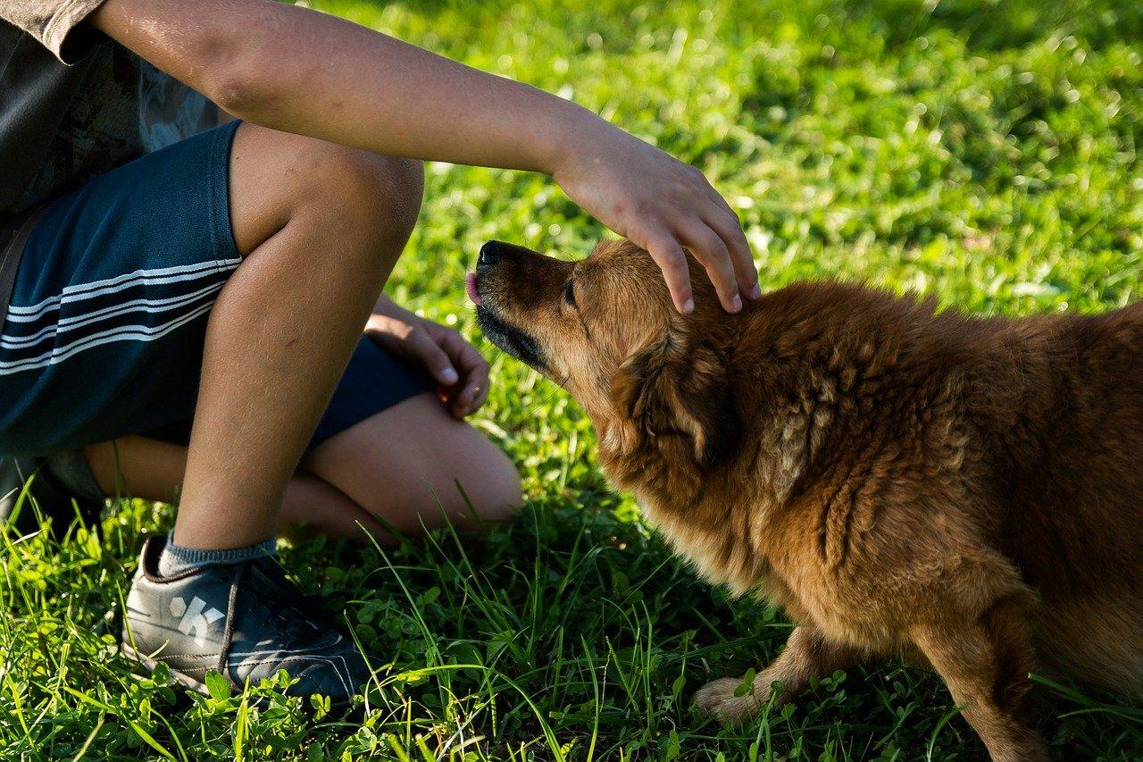 dimagrire camminando con il cane