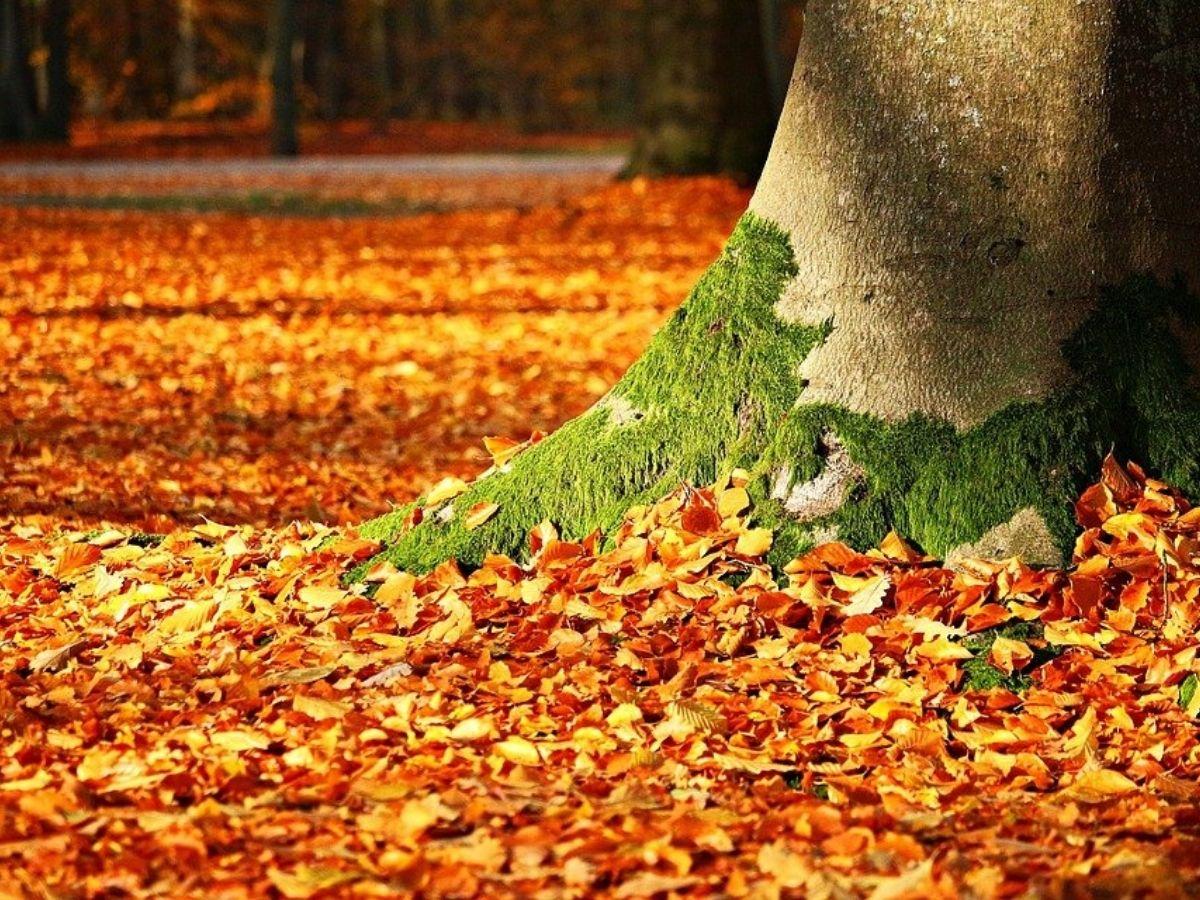 foliage autunno effetti benefici