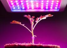 vantaggi led per coltivazione indoor