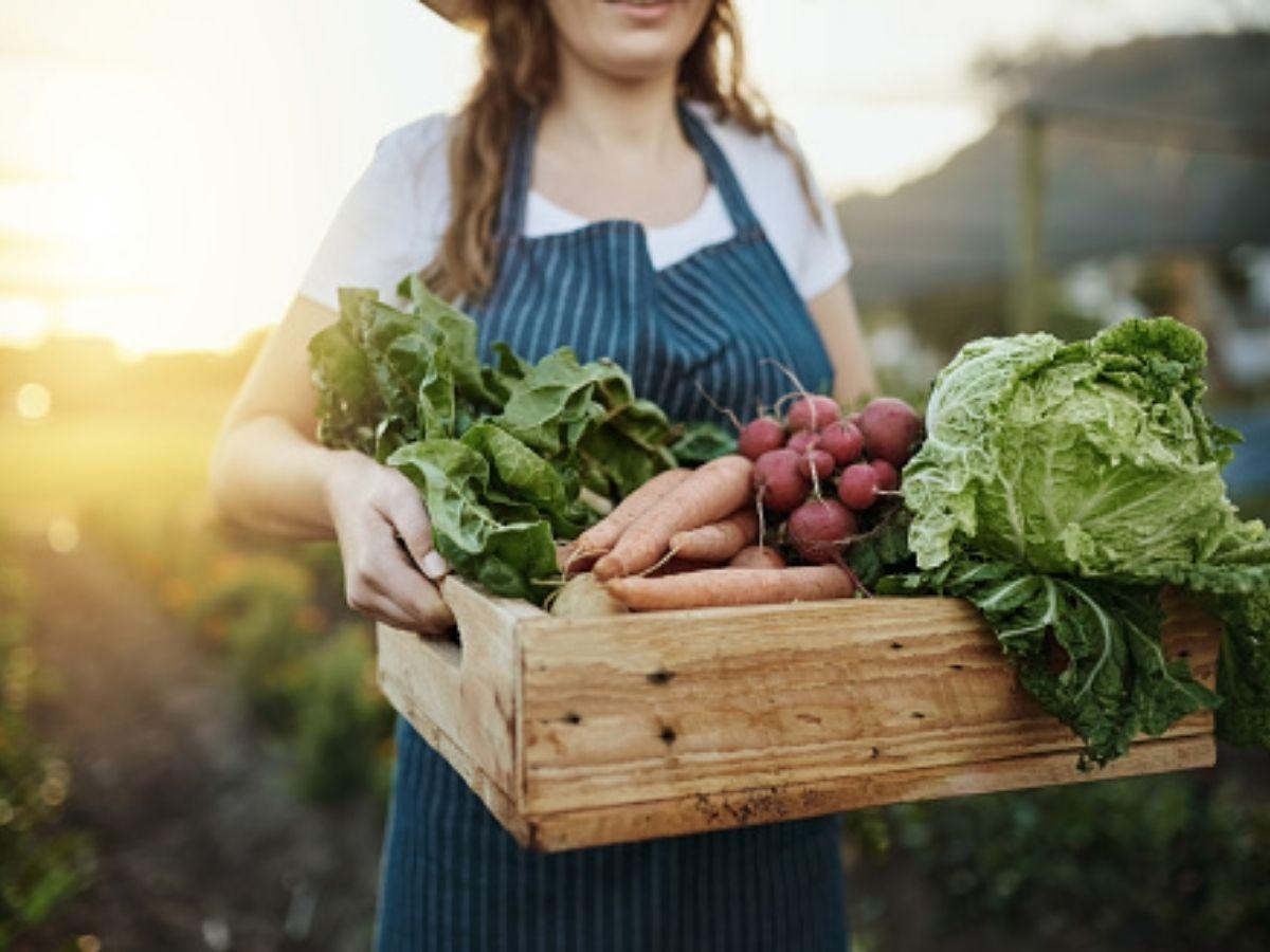 dieta ecologica come nutrirsi in modo sostenibile