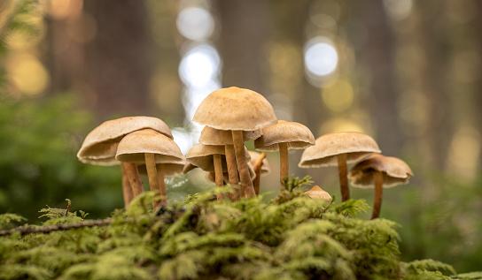 funghi skincare prodotti