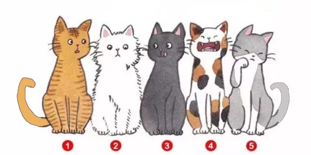Scegli un gatto e scoprirai come ti vedono gli altri
