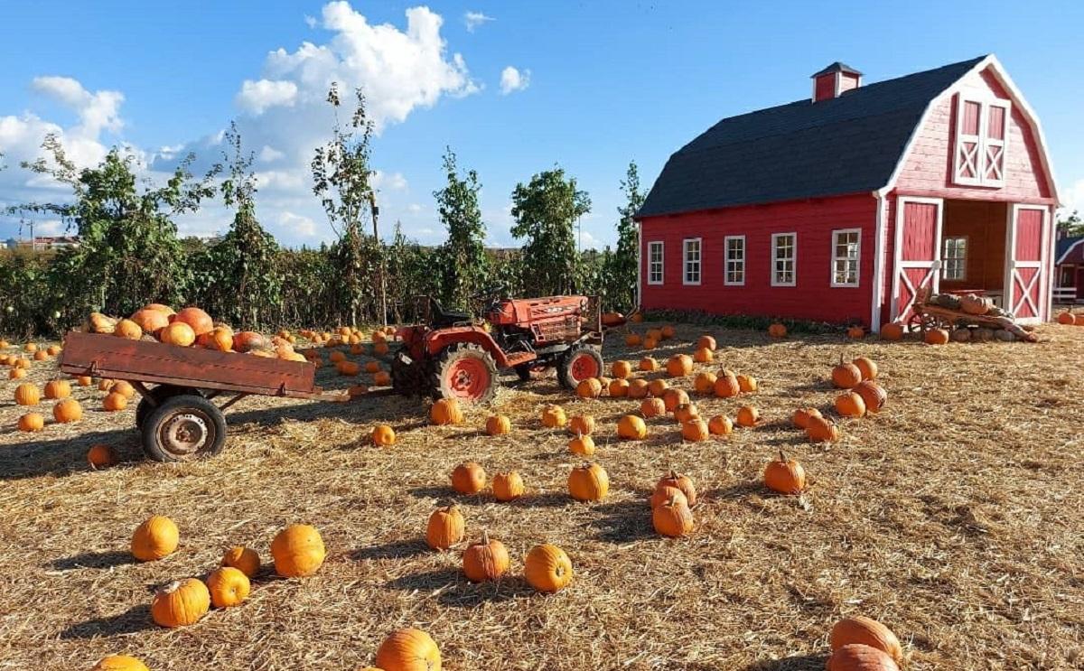 Dove fare pumpkin patch